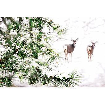 Winter Dream Poster Print von Lu Anne Tyrrell