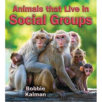 Animals That Live in Social Groups (Big Science Ideas (Paperback))