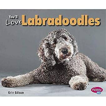 Pokochasz Labradoodles (ulubionych projektantów psów)