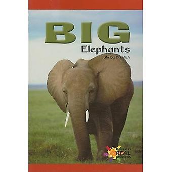 Big Elephants (Rosen Real Readers: Early Emergent)