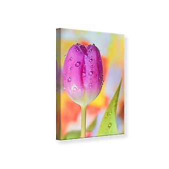 Canvas afdrukken de tulp In de ochtenddauw