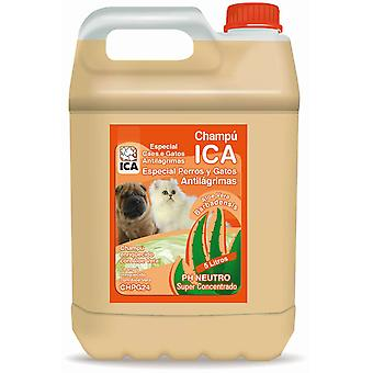 Ica Champ? Antilagrimal 5 Lts Aloe Vera (Dogs , Grooming & Wellbeing , Shampoos)
