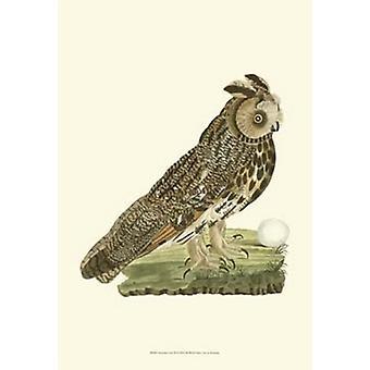 Nozeman Owls III Poster Print (13 x 19)
