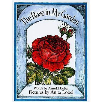 Die Rose in meinem Garten