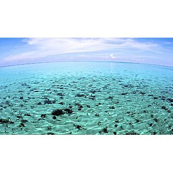 The North Sound on a flat calm morning Grand Cayman Poster Print