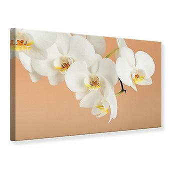 Lærred Print hvid orkidé blomster