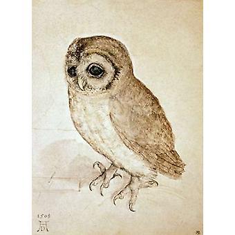 Screech Owl stampa del manifesto di Albrecht Durer