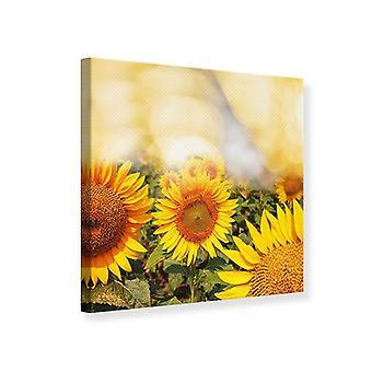 Leinwand drucken das Licht der Sonnenblumen