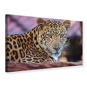 Leopardo de impresión de lienzo