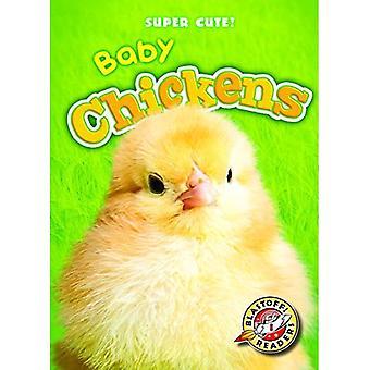 Baby Chickens (Super Cute!)