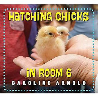 Hatching Chicks in Room 6 by Caroline Arnold - 9781580897358 Book