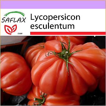 Saflax - 10 seeds - Tomato - Costoluto Genovese - Tomate Costoluto Genovese - Pomodoro Costoluto Genovese - Tomate - Costoluto Genovese - Tomate - Costoluto Genovese
