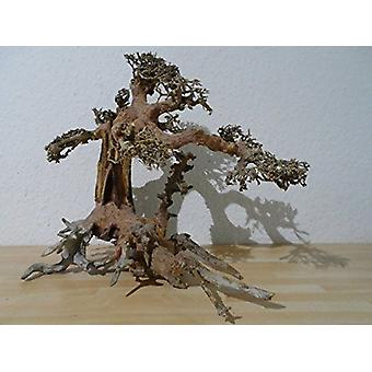 SuperFish naturale legno Bonsai Aquarium Decor Driftwood piccolo
