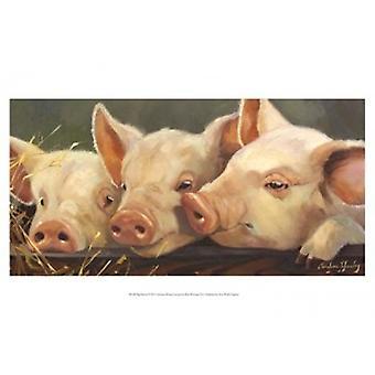 Impresión de Poster de cielo cerdo por Carolyne Hawley (19 x 13)