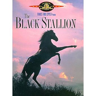 Black Stallion [DVD] USA import