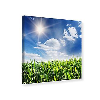 Canvas Print Spring Grass