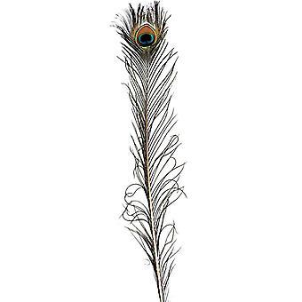 Fjær Peacock