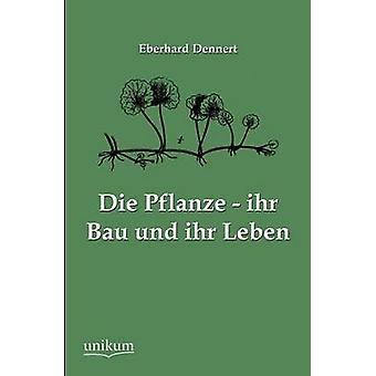 Die Pflanze  ihr Bau und ihr Leben by Dennert & Eberhard