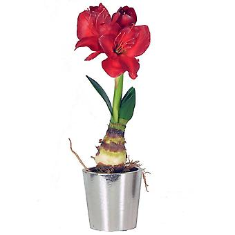 Amaryllis Red Bulb with Silver Pot