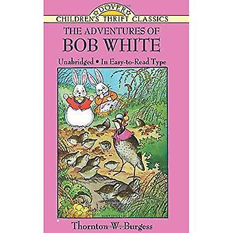 Le avventure di Bob White (società finanziarie per bambini)