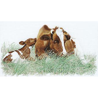 Brown Cow On Aida Counted Cross Stitch Kit-17.75