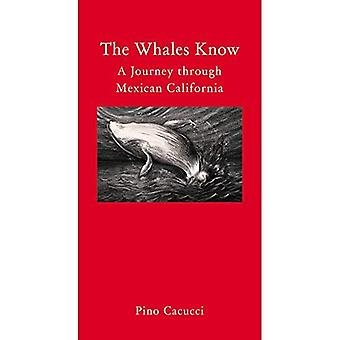 The Whales Know: Travels Along the Baja California Peninsula (Armchair Traveller) (Armchair Traveller (Haus Publishing))