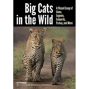 Big Cats in the Wild: A Visual Essay of Lions, Jaguars, Leopards, Pumas, and More