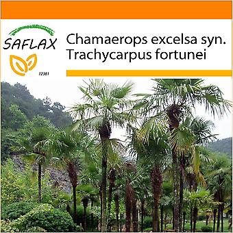 Saflax - Garden in the Bag - 10 seeds - Chinese Windmill Palm - Palmier à chanvre - Palma di Chusan - Palma enana - Hanfpalme