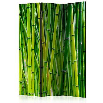 Rumsavdelare - bambu skog [rumsavdelare]