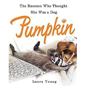 Pompoen: De wasbeer die dacht dat ze Was een hond