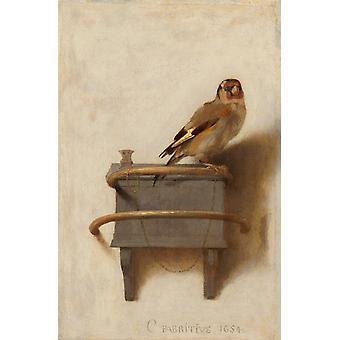Il Cardellino, Carel FABRITIUS, 33,5 x 22.8 cm