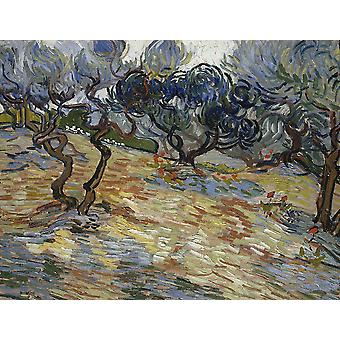 Vincent Van Gogh - Olive Trees, Bright Blue Sky, 1889 Poster Print Giclee