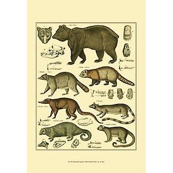 Bear & Racoon Poster Print by Oken (13 x 19)