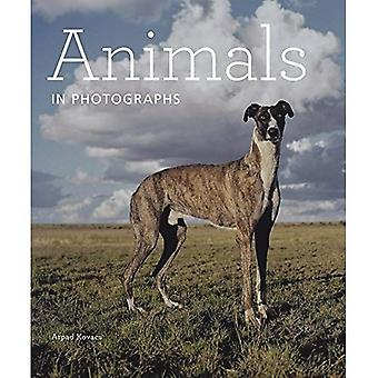 Animals in Photographs