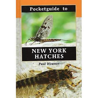 Guia de bolso para hachuras de Nova York