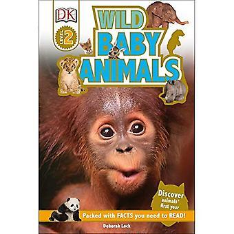 Wild Baby Animals (DK Readers: Level 2)