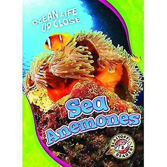 Sea Anemones (Ocean Life Up Close)