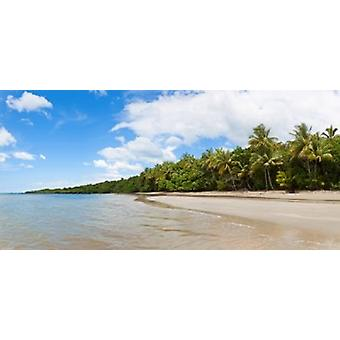 Trees on the beach Cape Tribulation Daintree River National Park Queensland Australia Poster Print