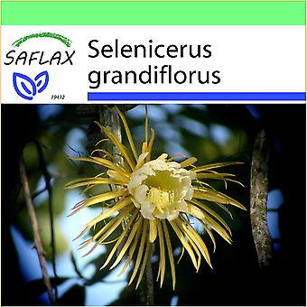 Saflax - Garden to Go - 40 seeds - Queen of the Night - Reine de la nuit - Regina della notte - Reina de las flores - Königin der Nacht