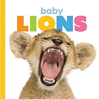 Baby Lions (Starting Out)