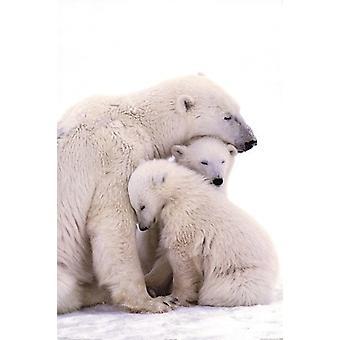 طباعة الملصق ملصق الأسرة الدب القطبي