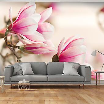 Wallpaper - Branch of magnolia tree