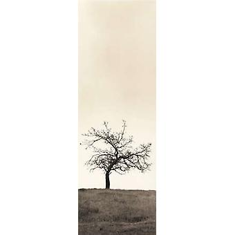 Cherry Blossom Tree Poster Print by Alan Blaustein