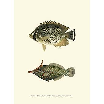 Fish of the Coral Reef V Poster Print (10 x 13)