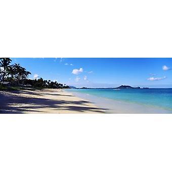 أشجار النخيل على شاطئ Lanikai بيتش اهو هاواي الولايات المتحدة الأمريكية طباعة ملصق