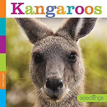 Kängurur (plantor)