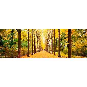 Tree-lined road Schwetzingen Germany Poster Print
