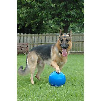 Selskab med dyr Boomer bold, hund legetøj 8