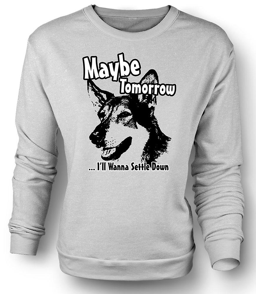 Mens Sweatshirt Littlest Hobo - Maybe Tomorrow - Funny