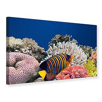 Canvas Print Dive With The Fishes